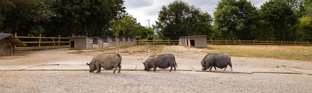 Aidez les animaux. Donner au refuge GroinGroin, c'est sauver des animaux.