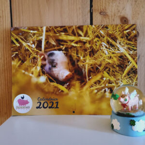 calendrier 2021 animaux