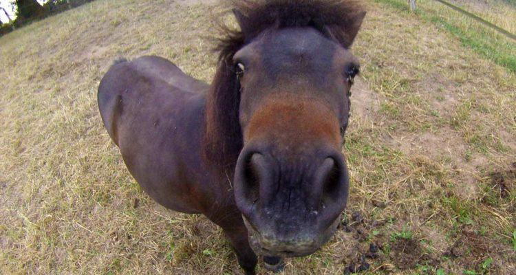 aider-animaux-arthur-poney-02