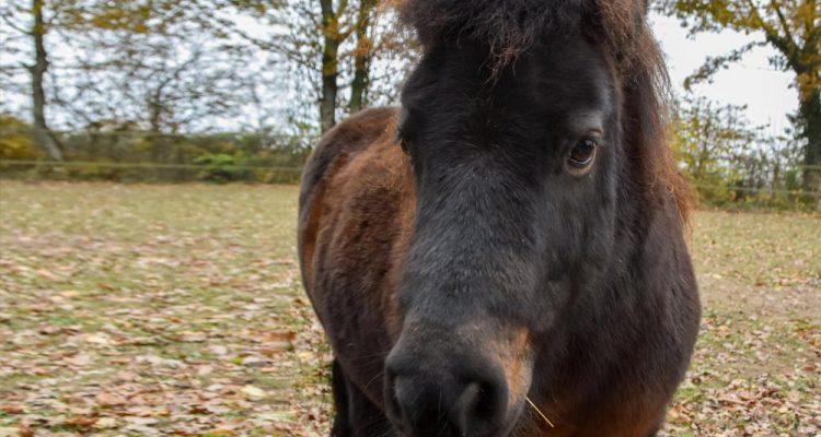 aider-animaux-arthur-poney-04