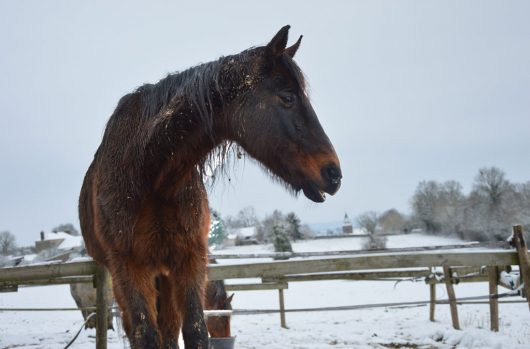aider-animaux-cheval-drilloso-03