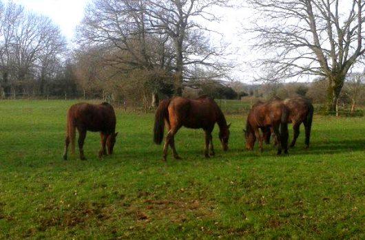 aider-animaux-cheval-drilloso-05