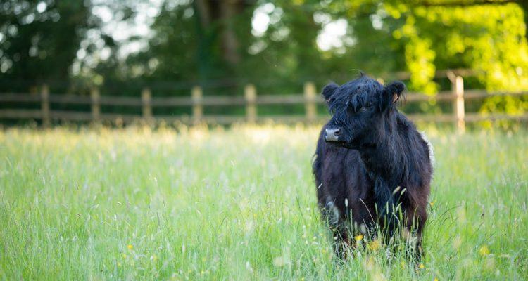 aider animaux refuge