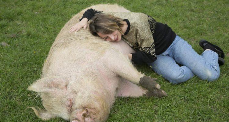 aider-animaux-heston-06
