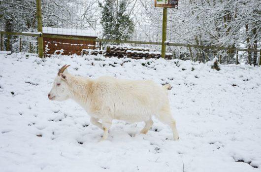 aider-animaux-white-02