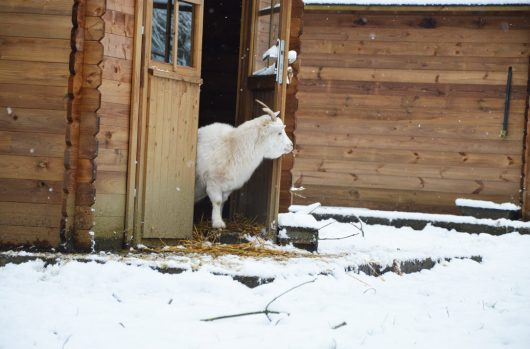 aider-animaux-white-03